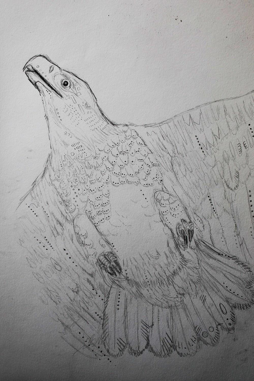 eagle-tortoise-sketch1.jpg.JPG
