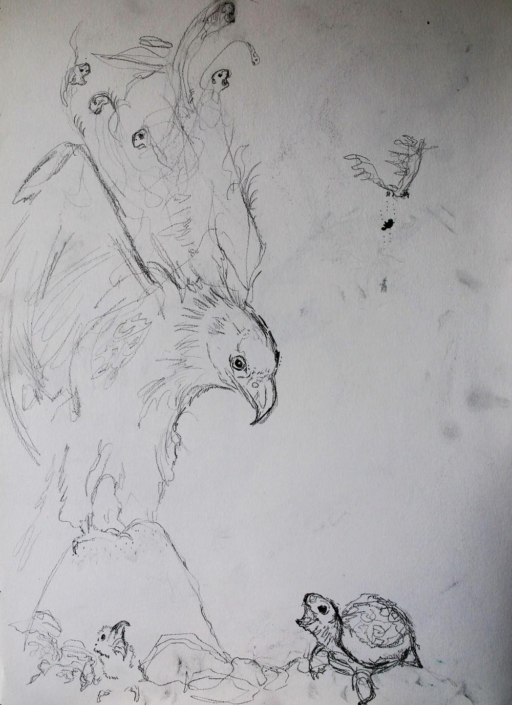 eagle-tortoise-sketch5.jpg.JPG