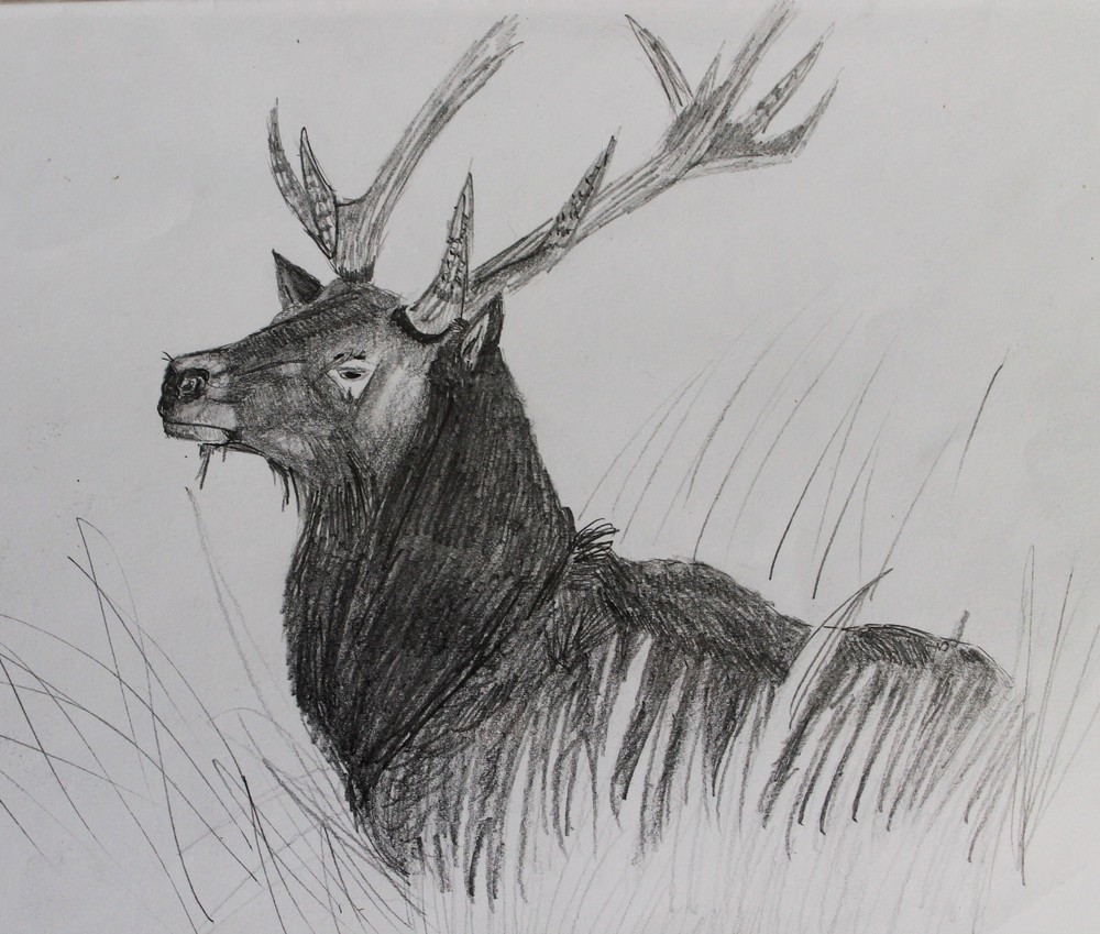 2010, 4B pencil drawing of a stag