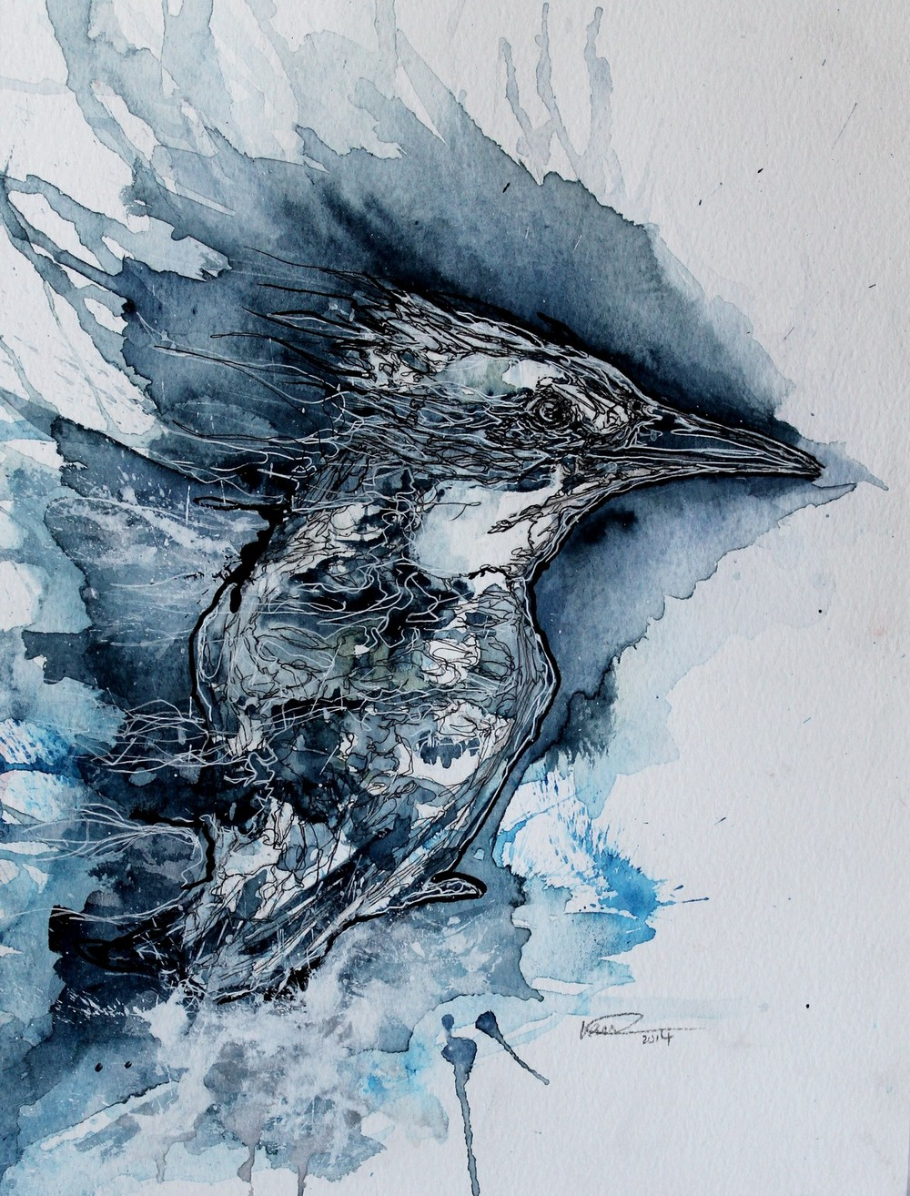 A continuous-line illustration inspired by a  pied kingfisher  photo by  Thom Haslam . This illustration was made using watercolour, ink, gouache and white pen.