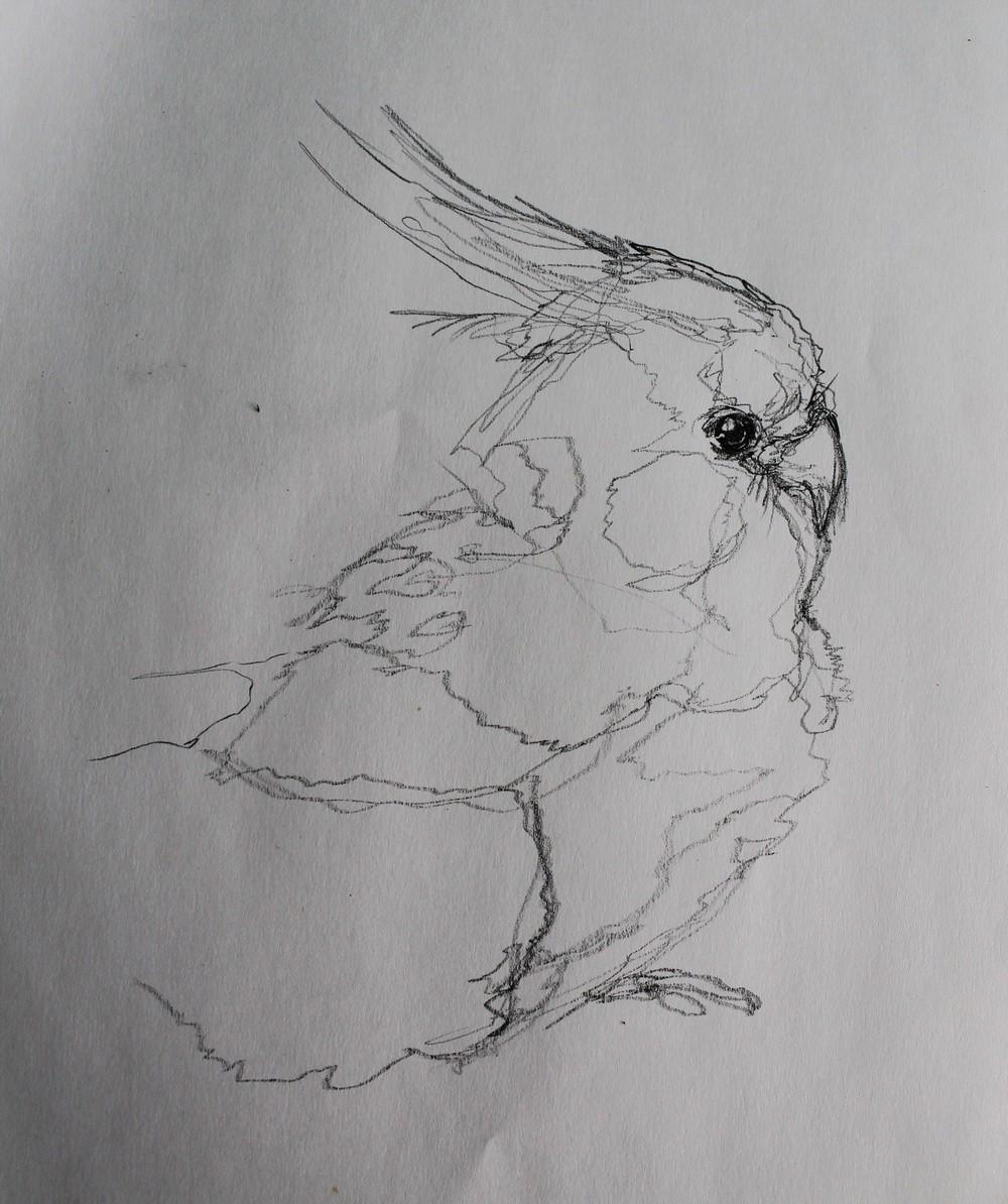 bird2.jpg.JPG