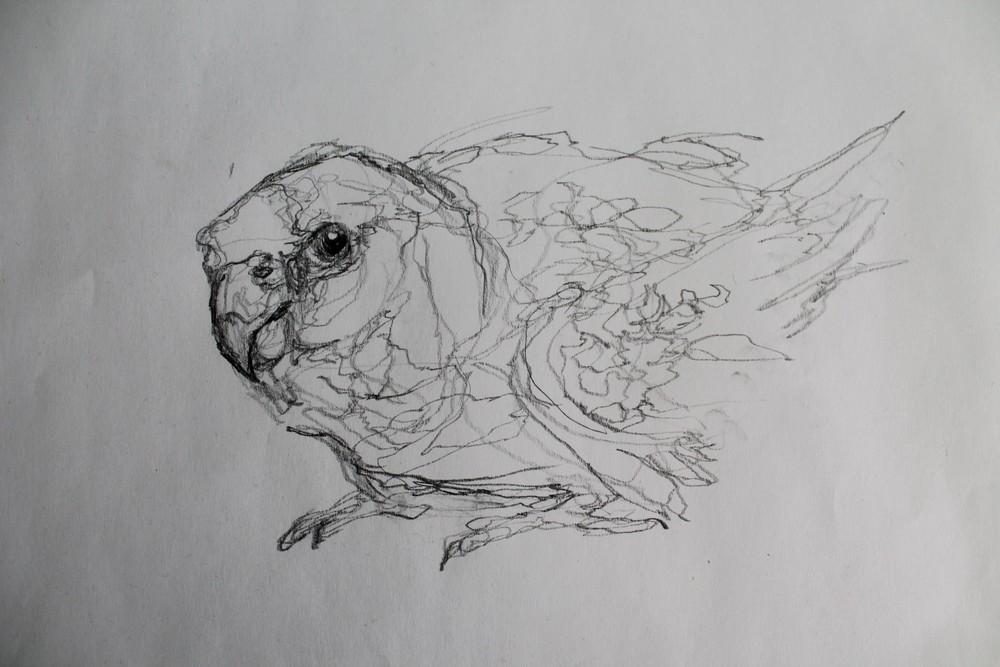 bird3.jpg.JPG