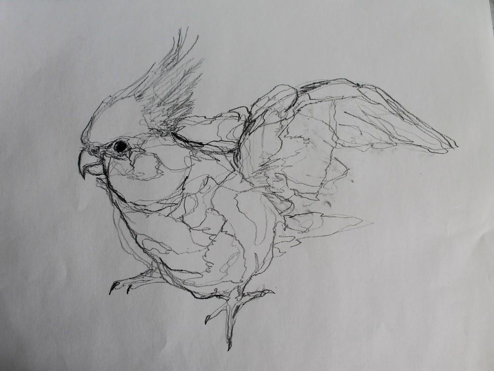 bird4.jpg.JPG
