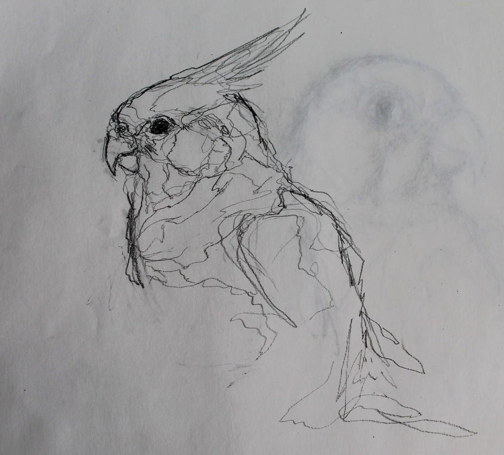 bird5.jpg.JPG