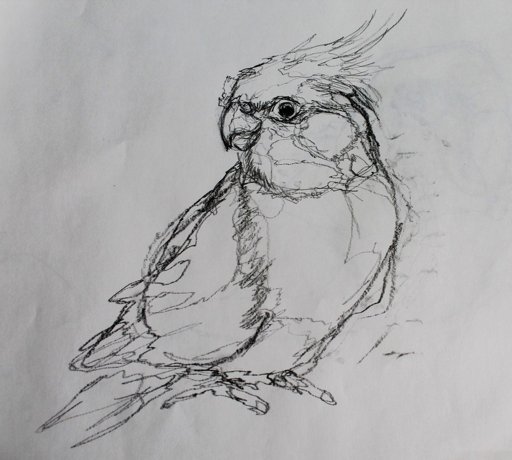 bird6.jpg.JPG