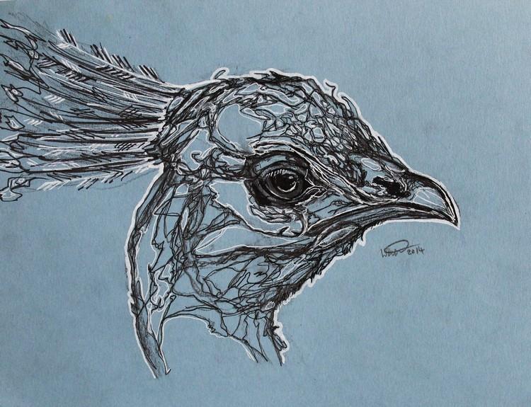 peacock4.jpeg
