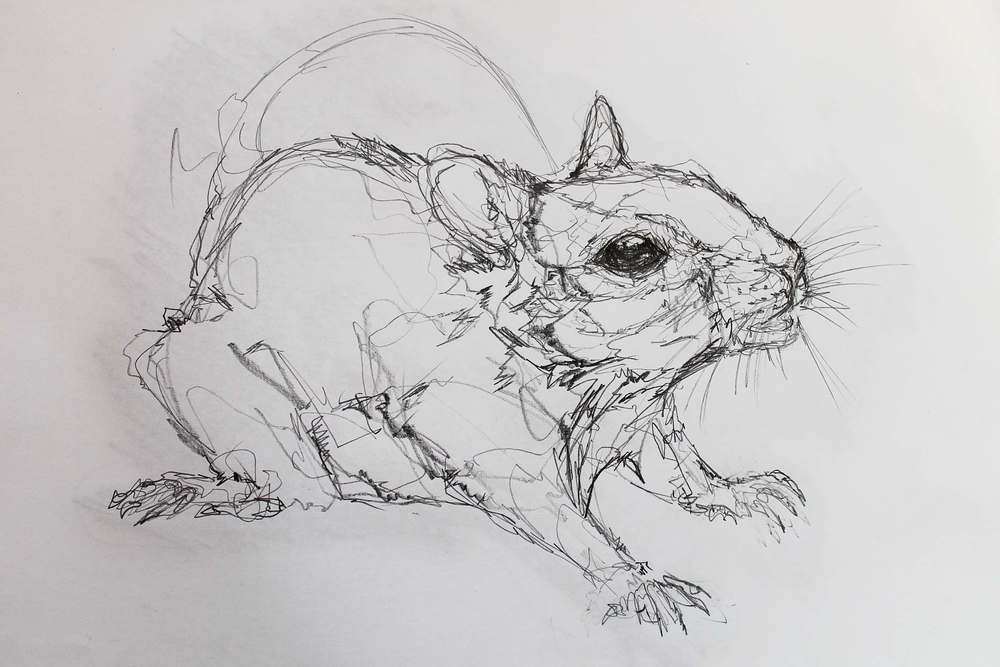 Line Drawing Rat : Brusho rat u2014 oddkness