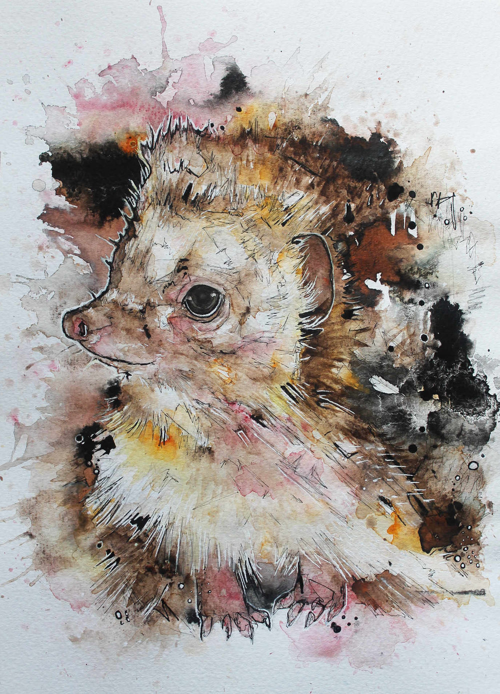 hedgehog-4.jpg