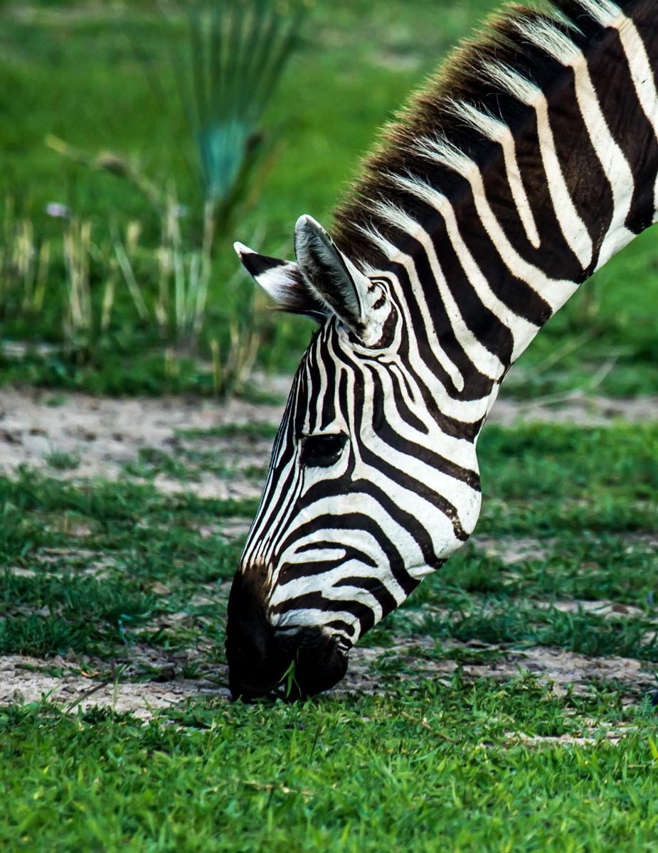 africa-1298.jpg