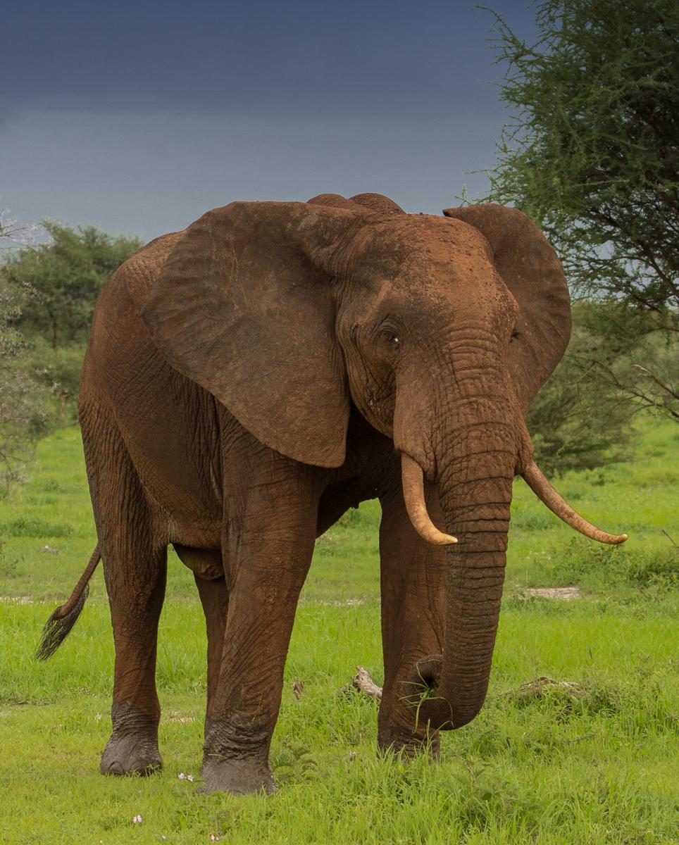 Africa-2512-Edit.jpg