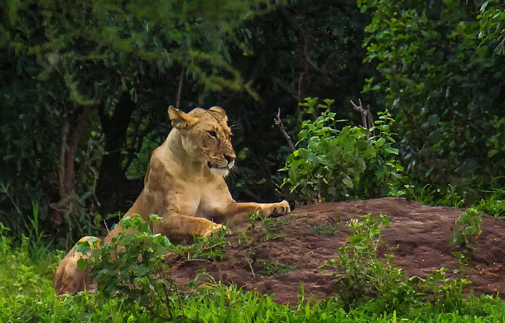 Africa-2724-Edit-Edit.jpg