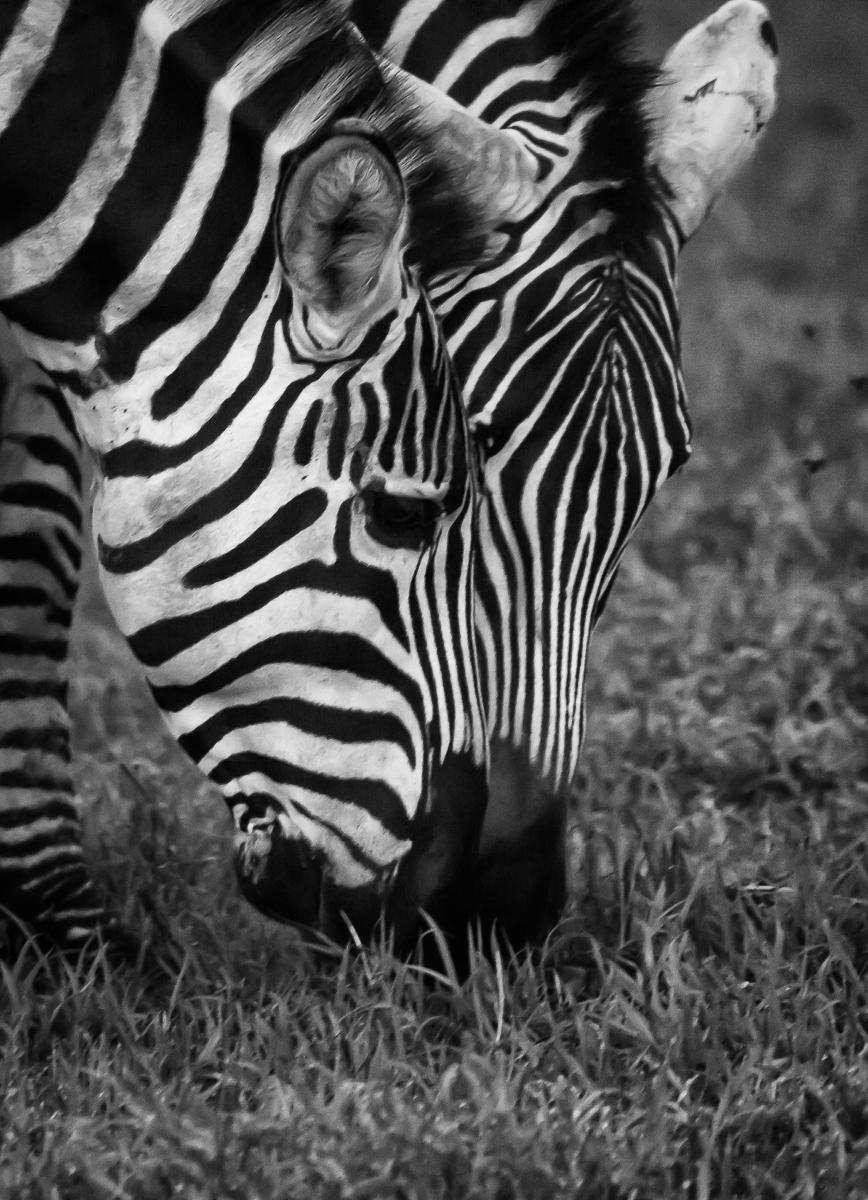 Africa-4251-Edit.jpg