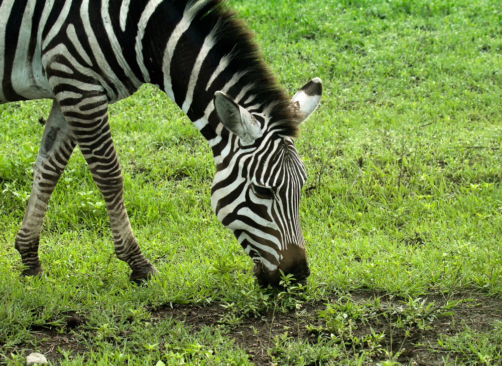 Africa-4828-Edit.jpg