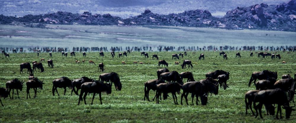 Africa-6022-Edit-Edit-Edit.jpg