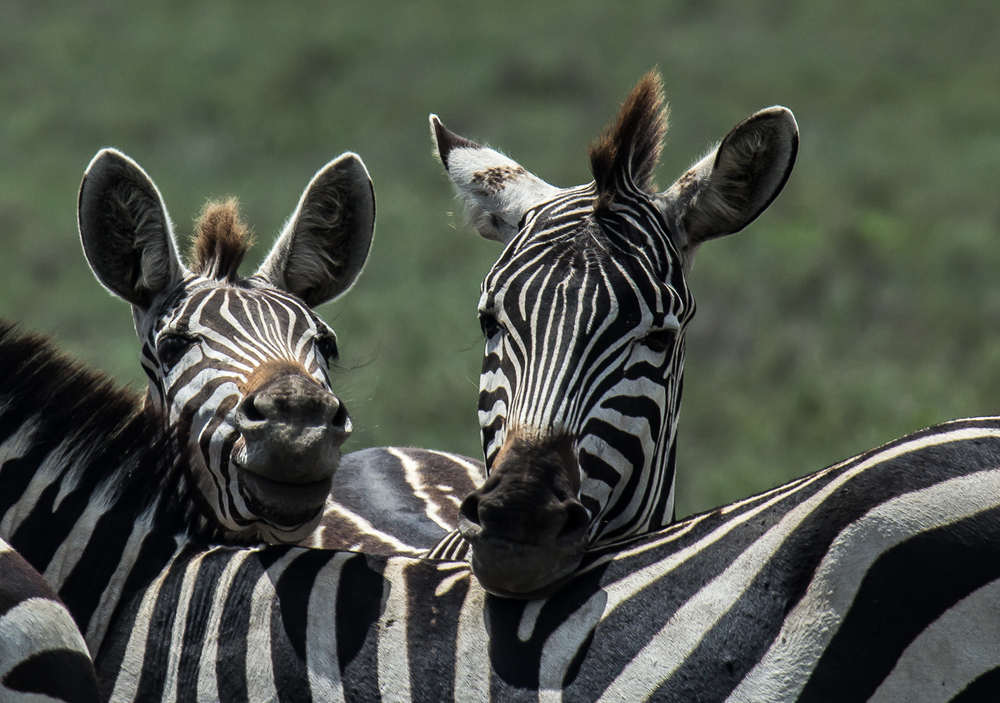 Africa-6045.jpg