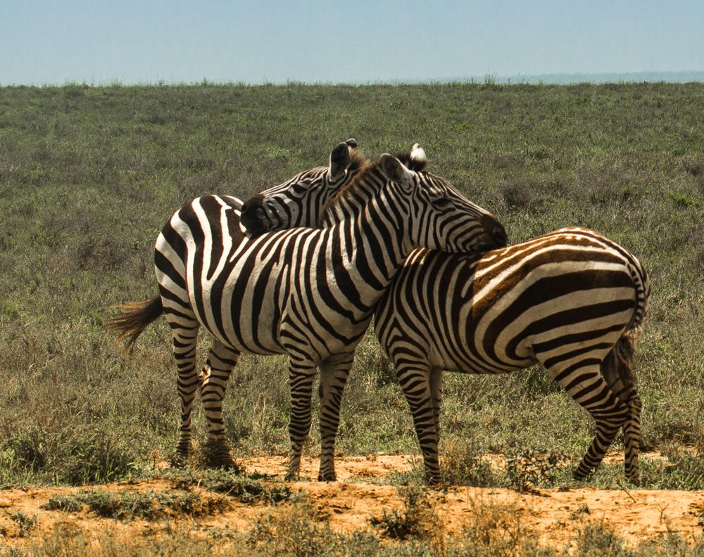 Africa-6048-Edit-3.jpg