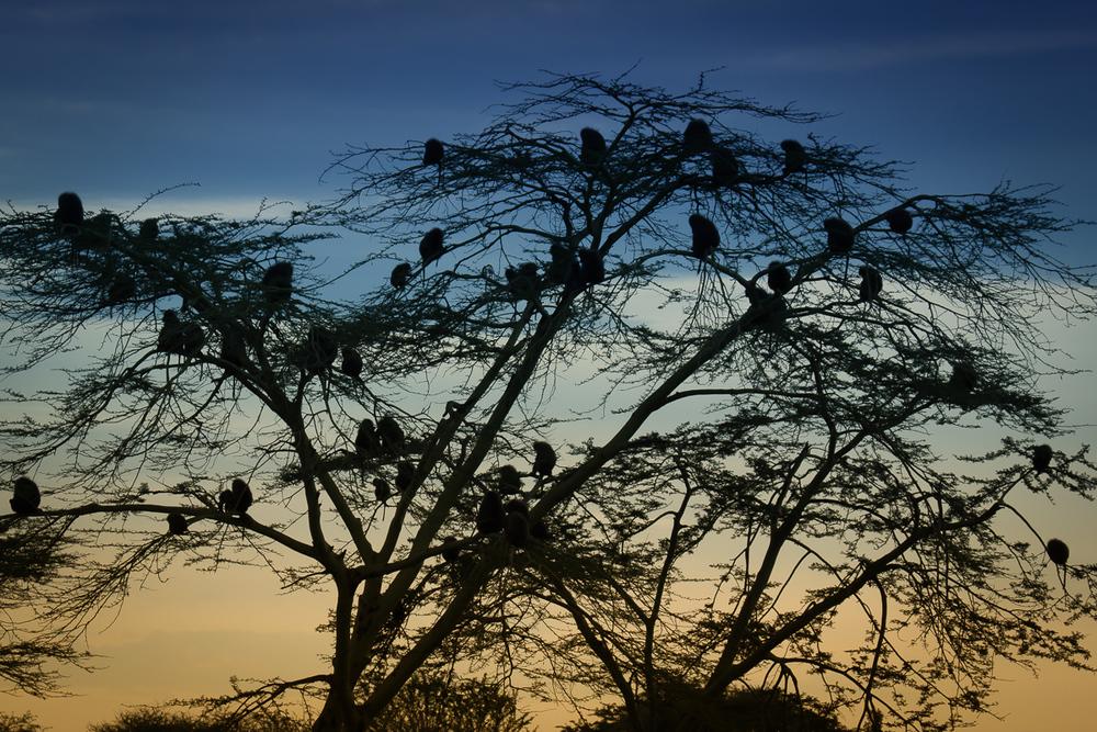 Africa-6634-Edit.jpg