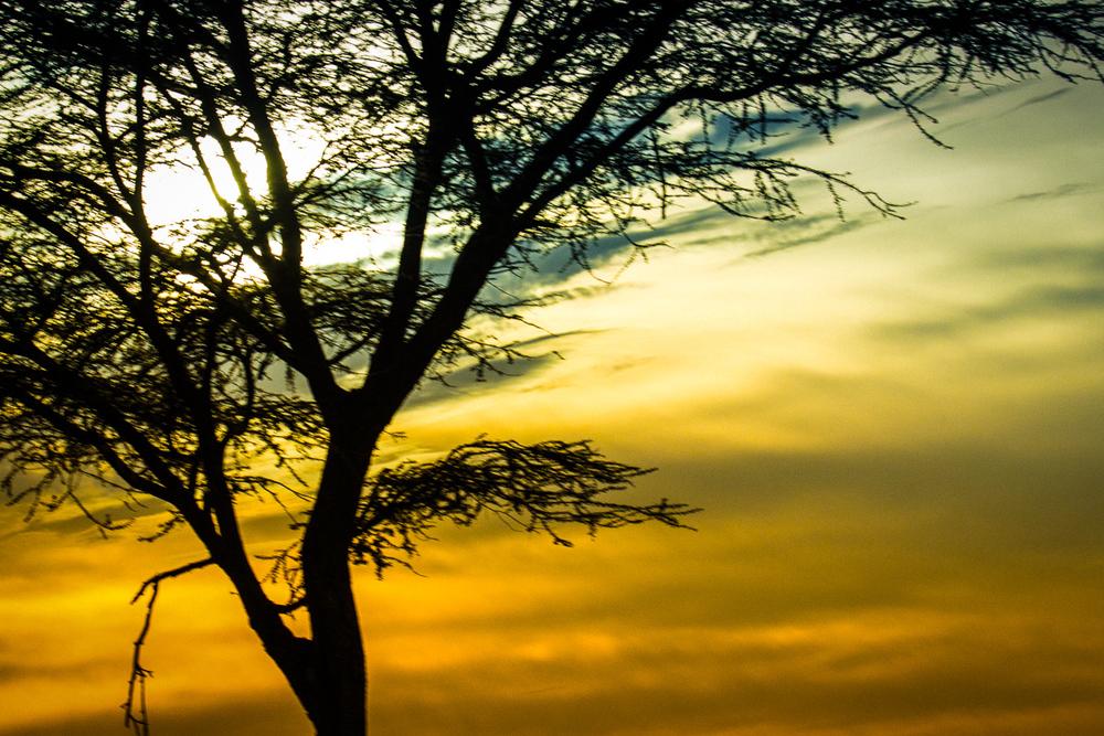 Africa-6643-Edit.jpg