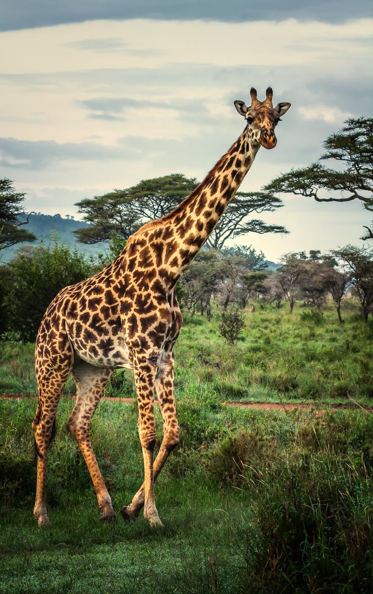 Africa-6763-Edit-Edit.jpg