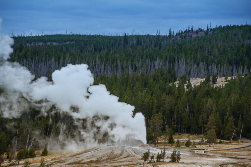 Lion Geyser, Yellowstone