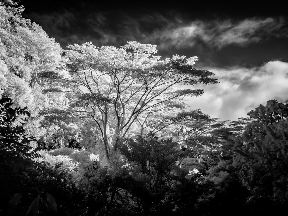 Hawaii-IR-101.jpg