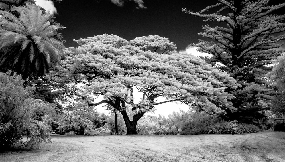 Hawaii-IR-107.jpg