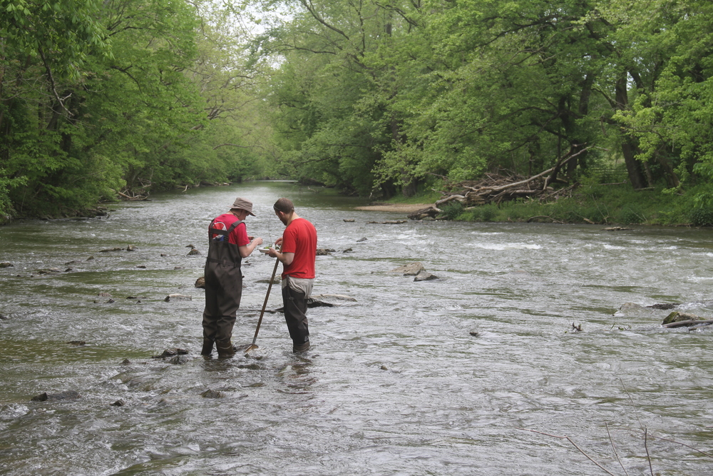 Sampling for larvae in Antietam Creek