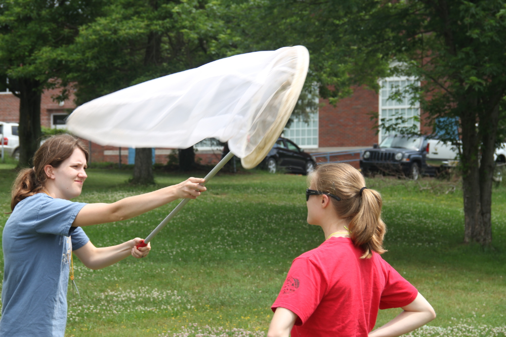 Collecting black flies with an aerial net. Photo: Bill Lamp