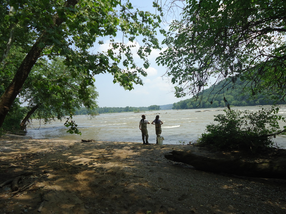 Looking out at the Potomac River before larval sampling. Photo: Claire Weber