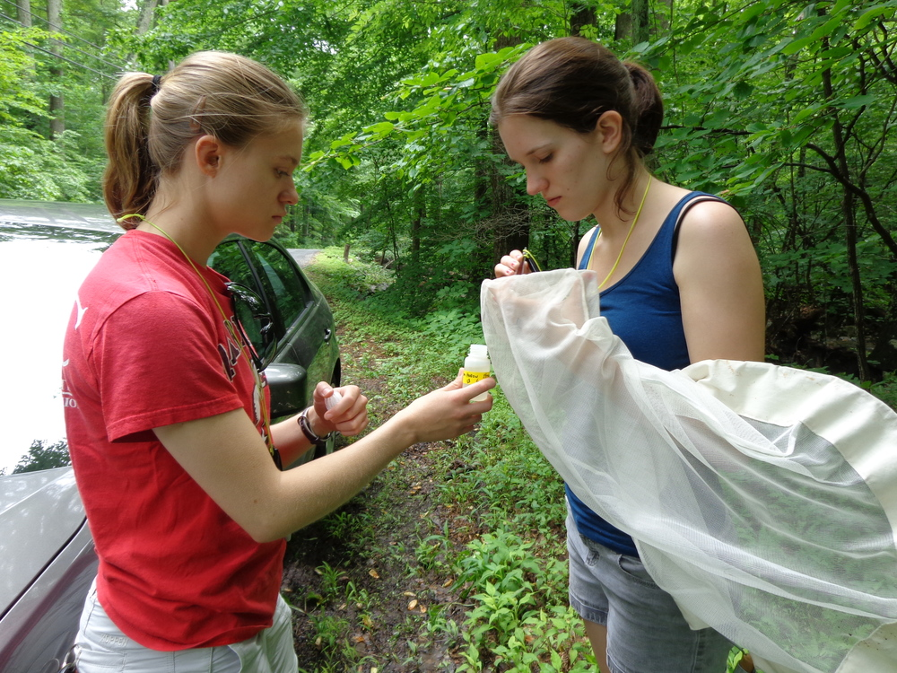 Sampling for black flies can be a strange sight. Photo credit Chloe Garfinkel.