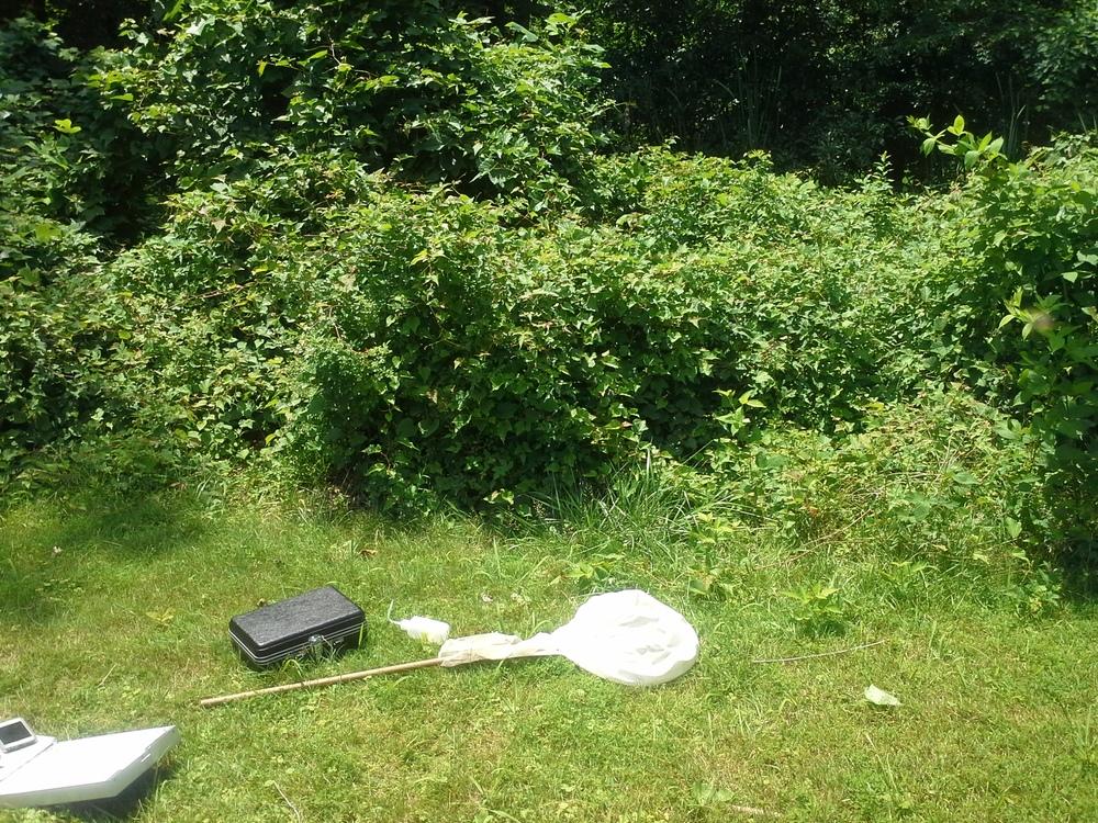 Our standard black fly sampling equipment strewn about at Ken-Gar Palisades Park in Kensington
