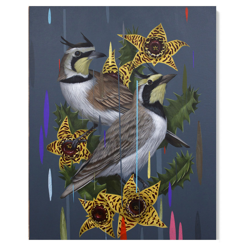 Frank Gonzales Horned Larks and Huernia Zebrina 16 x 20 Inches Acrylic on wood panel $2,050