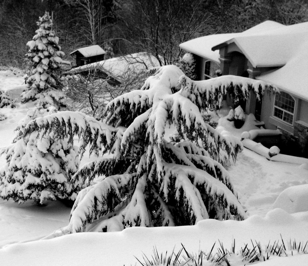 Victoria Snow Day