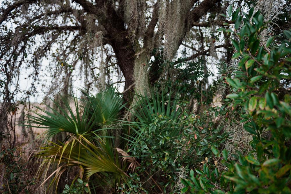 Florida-0148.jpg