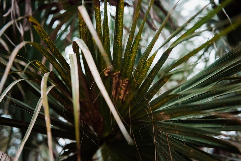 Florida-0272.jpg