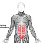 """Rectus abdominis"". Licensed under Creative Commons Attribution-Share Alike 3.0 via Wikimedia Commons http://commons.wikimedia.org/wiki/File:Rectus_abdomin is.png#mediaviewer/File:Rectus_abdominis.png"