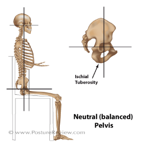 spine length