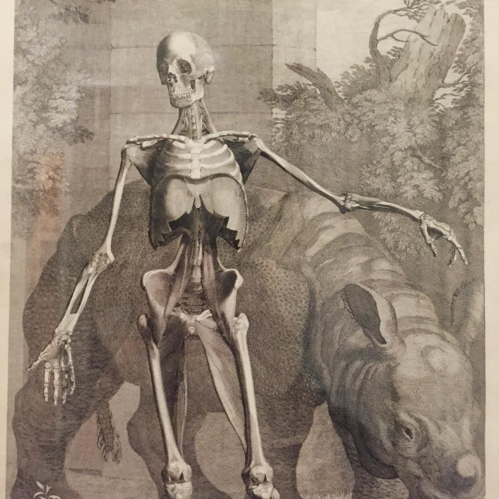 Image from Albinus on Anatomy by Robert Beverly Hale and Terence Coyle
