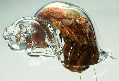 geneticist: Scientists at the New Zealand Marine Studies Centre placed glass shells into a hermit crab tank. The crabs moved into the glass shells shortly after, allowing scientists to study the crabs.