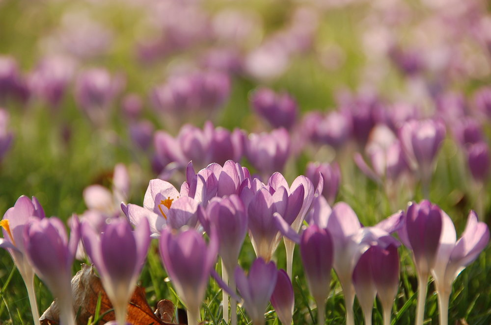 crocus, PTSD, therapy in London