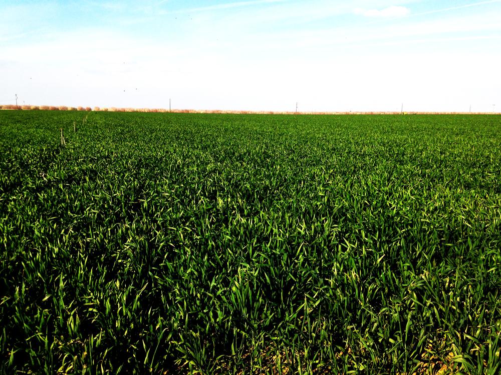 green crop_6193.jpg