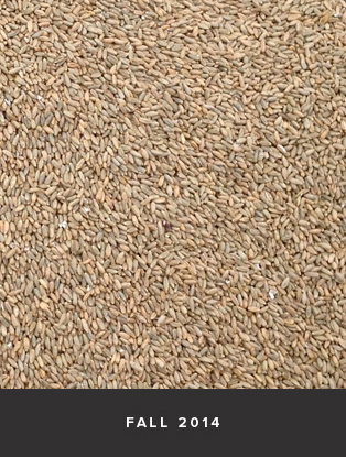 roknar-wheat.jpg