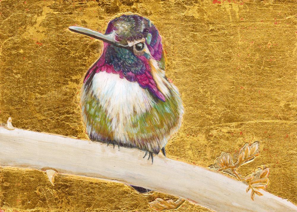 Costa's Hummingbird II