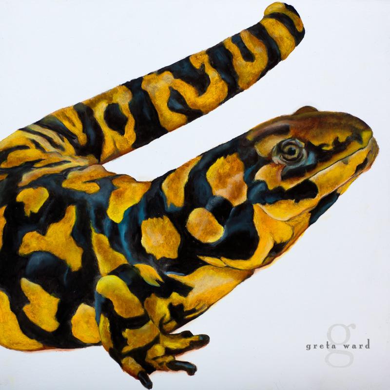 Sonora Tiger Salamander