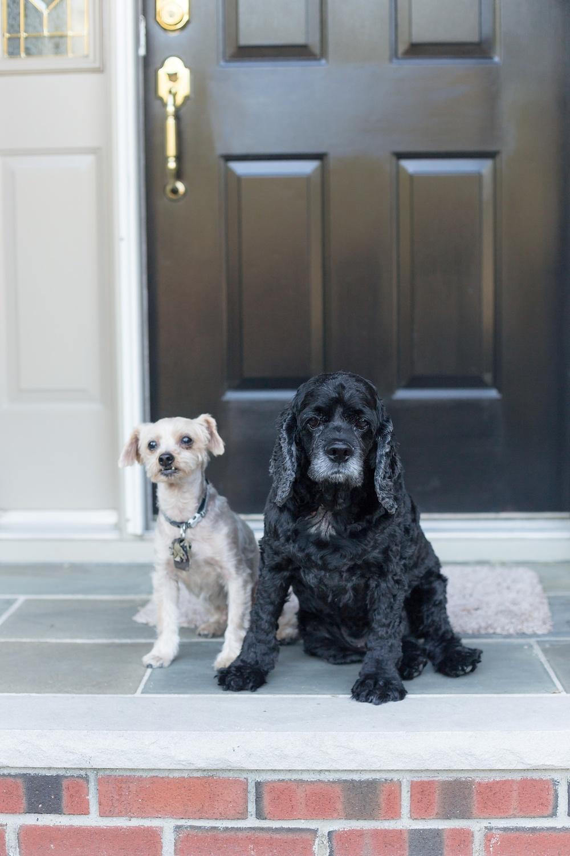 Anniversary_Dogs-105.jpg