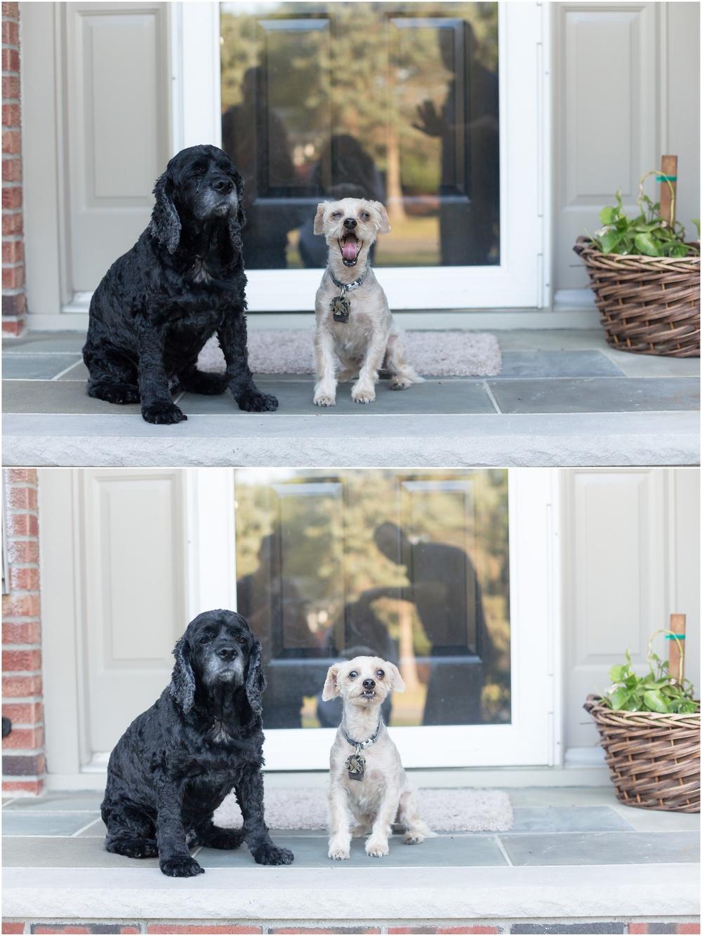 Anniversary_Dogs-103.jpg