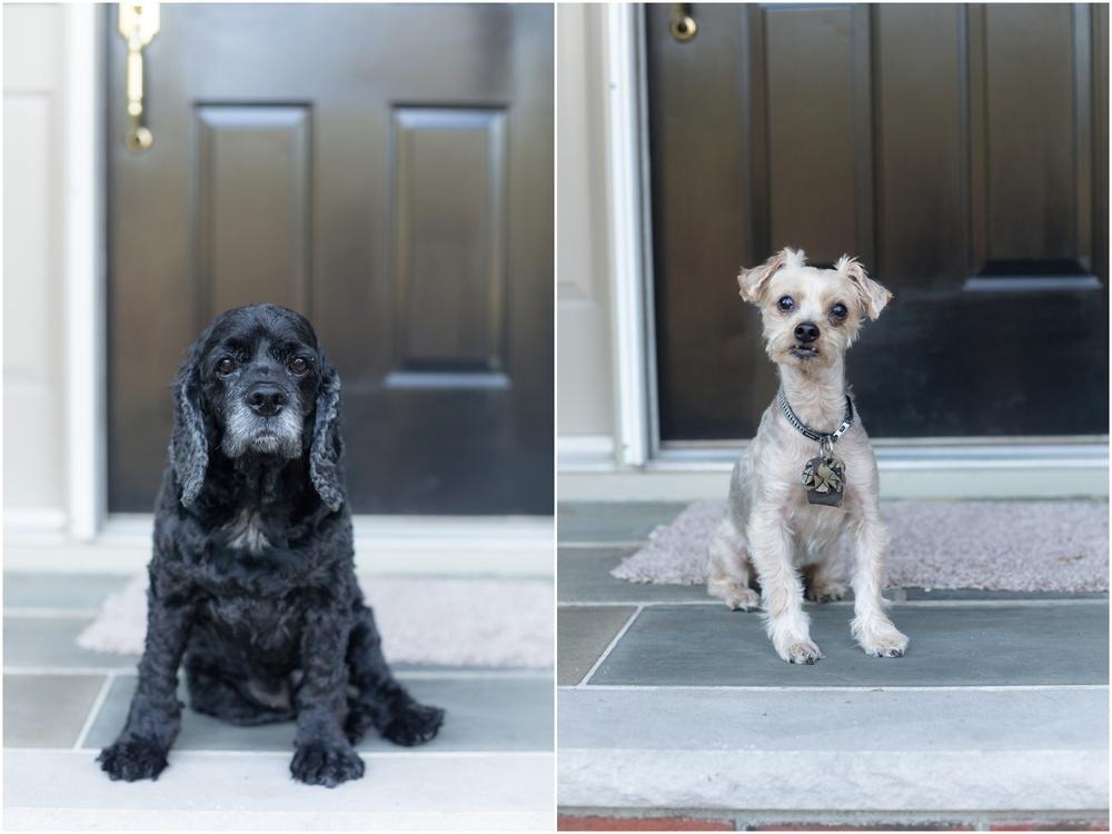 Anniversary_Dogs-110.jpg