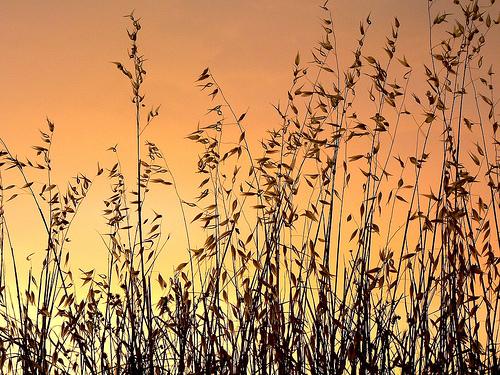 serenity-small.jpg