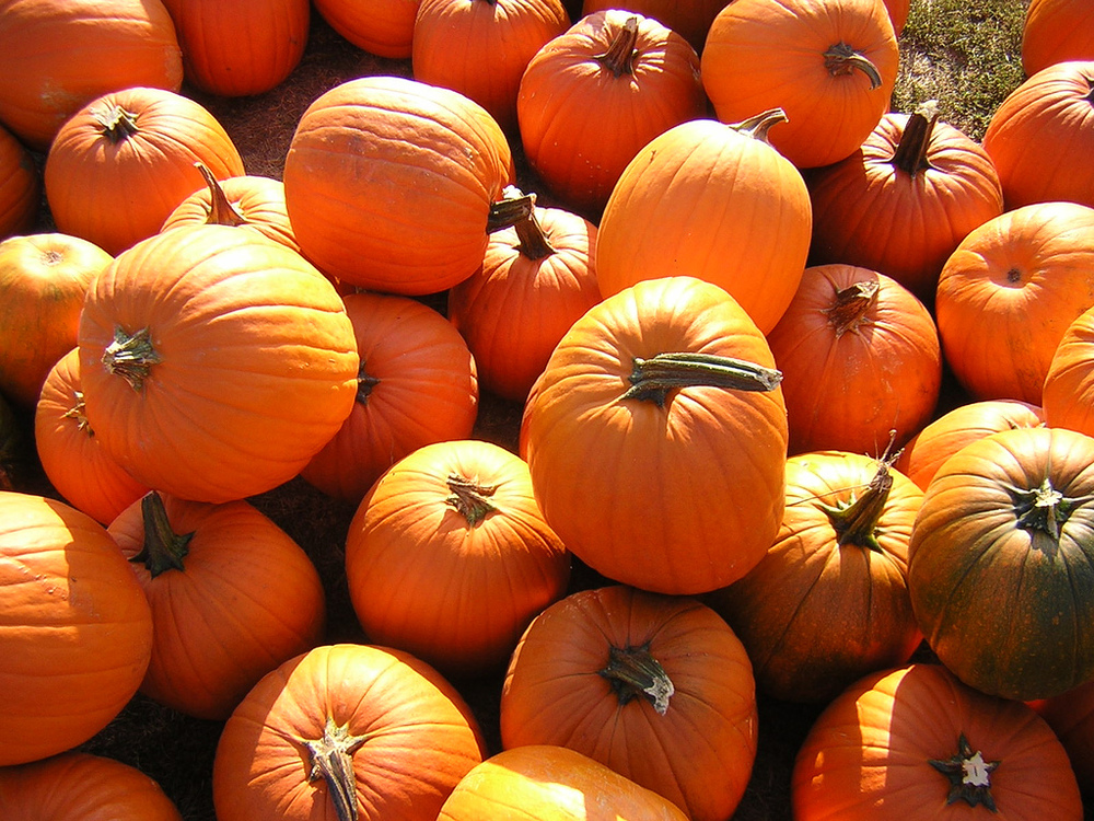 pumpkin skin benefits.jpg