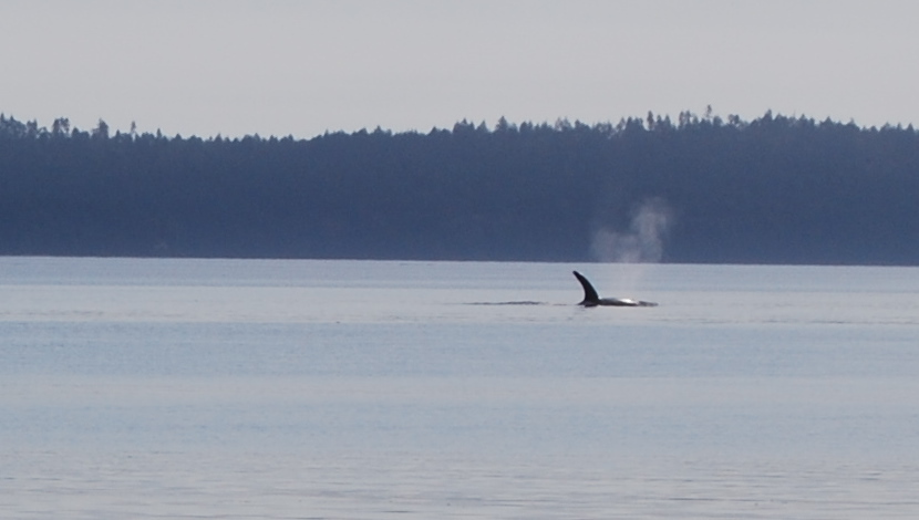 whale_shot_2.jpg